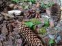 Projekt las w grupie Misi (Turka, 2021)