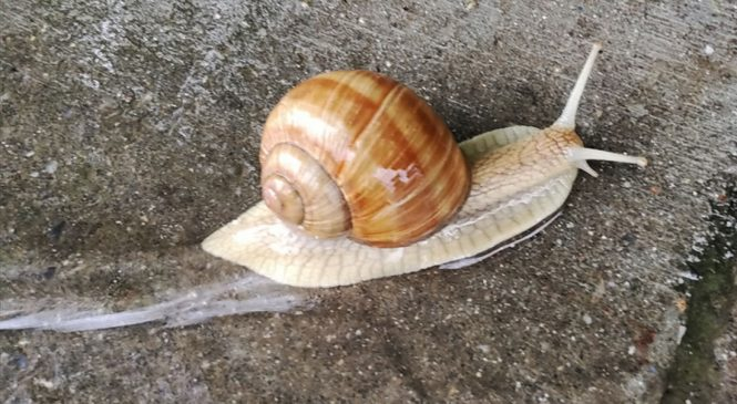 Czy ślimaki się ślimaczą?