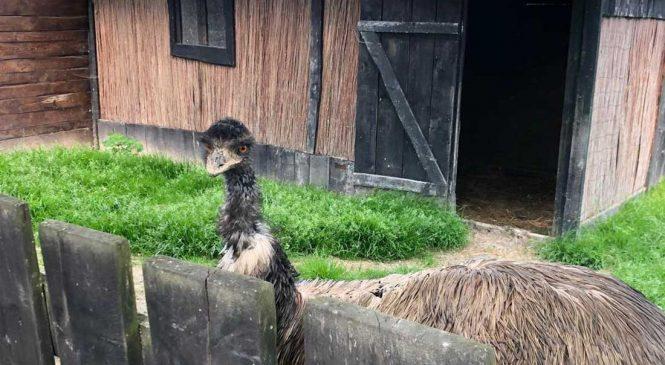 Wycieczka do Zoo w Wojciechowie